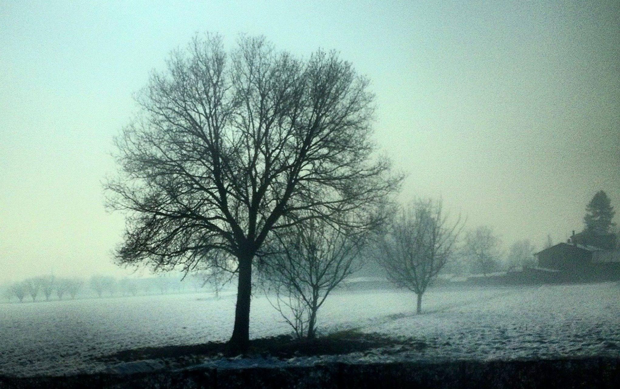 alberi dalla strada